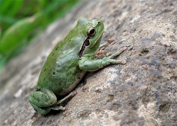 Una rana en el jardín