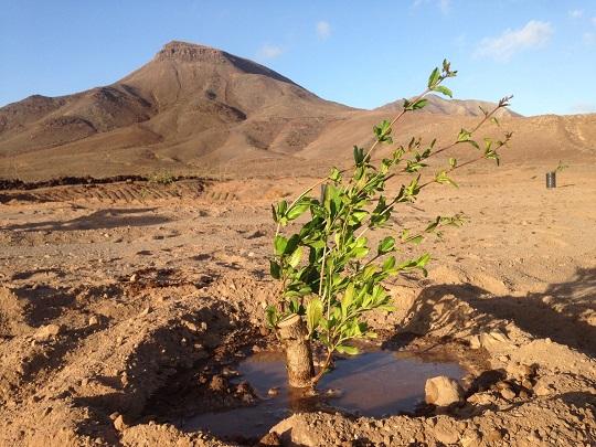 Plantamos árboles para luchar contra el cambio climático