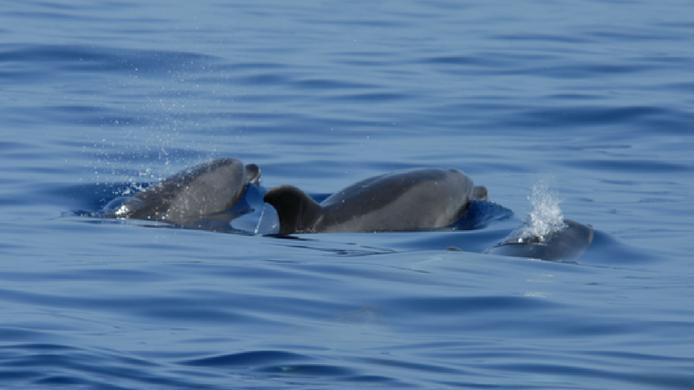 Una isla de ballenas y delfines