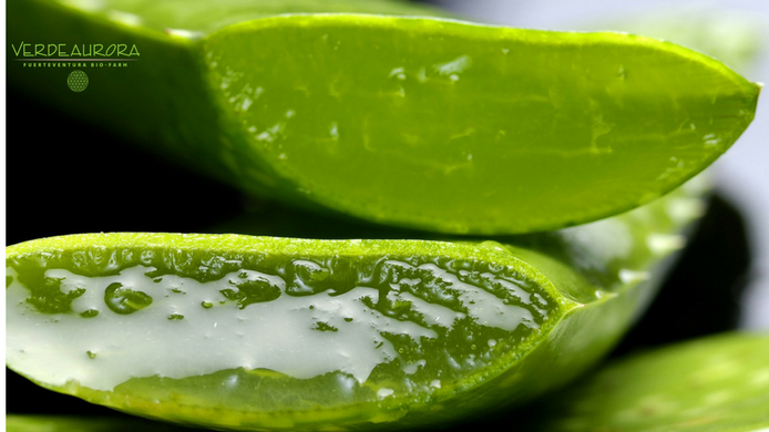El aloe vera: ¿una moda o un remedio real?