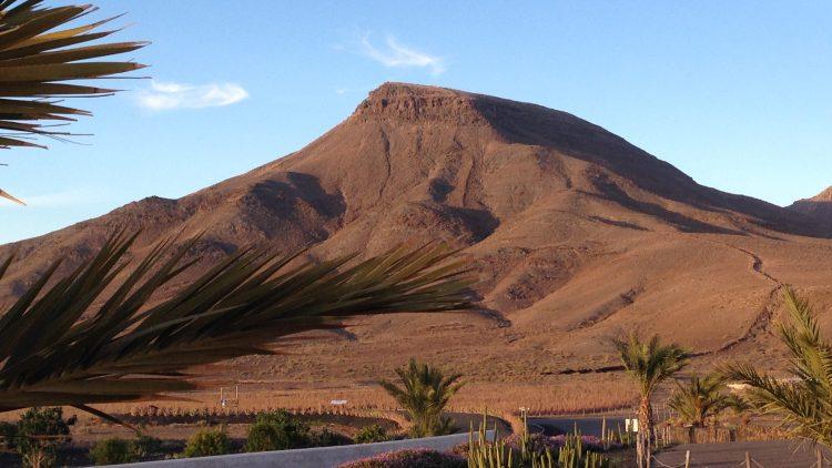 Besuch einer Aloe-Vera- und Olivenfarm auf der Insel Fuerteventura